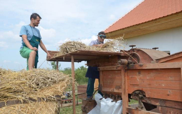 Z pole sklidili obilí, v ošatce voněl chleba!