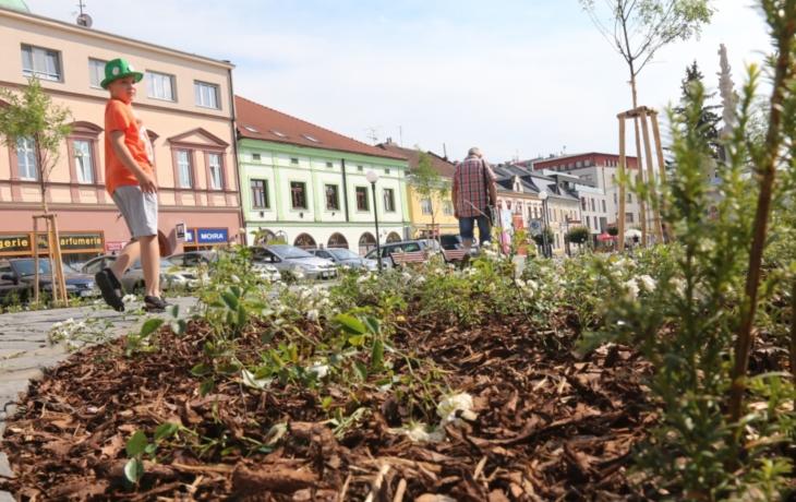 Lípy nahradily jerlíny, náměstí rozzáříly růže a levandule