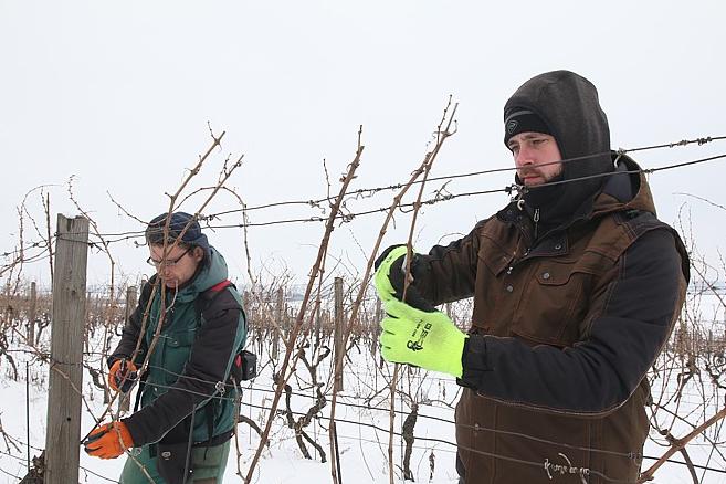 Vinaři se brodili po kolena ve sněhu
