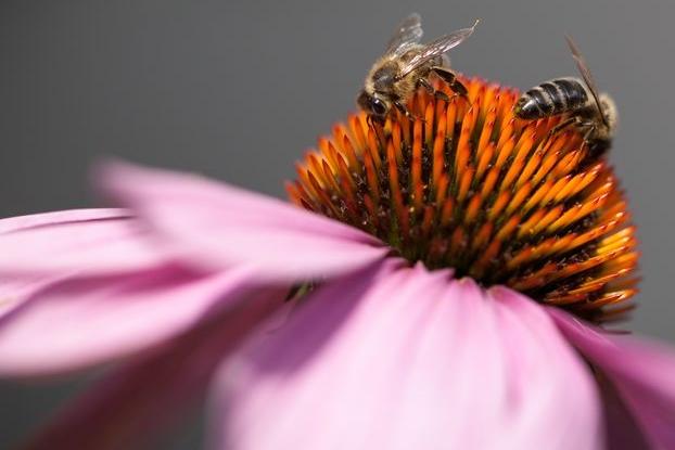 Začínající včelaři mohou žádat o podporu, ale jen do 2. března