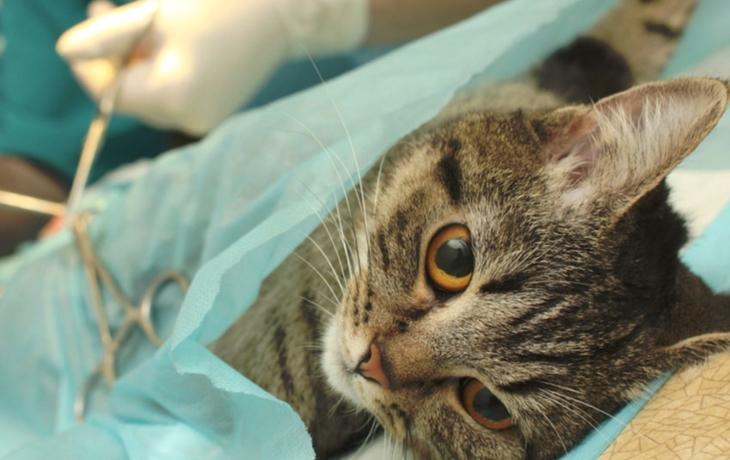 Kastrujte kočky, útulky už praskají ve švech!