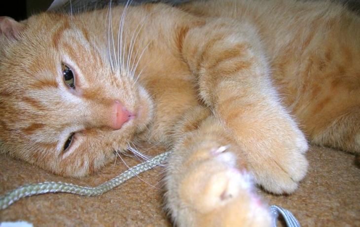 Mazlíčci SOS chtějí útulek pro kočky