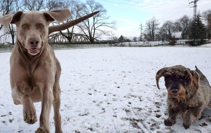 Hradiště má nové hřiště. Je pro psy a vstup je zdarma!