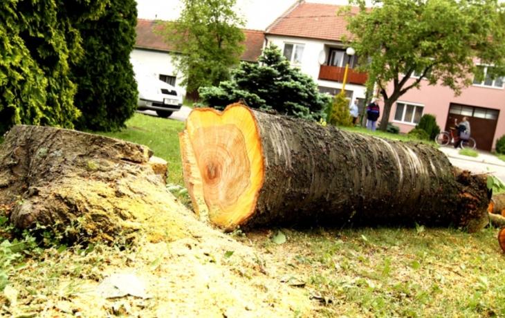 Stromy jsou v rozpuku, ale kácí se dál