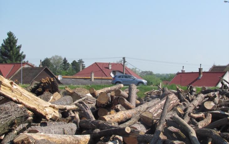 Snížili cenu dřeva, už je pryč