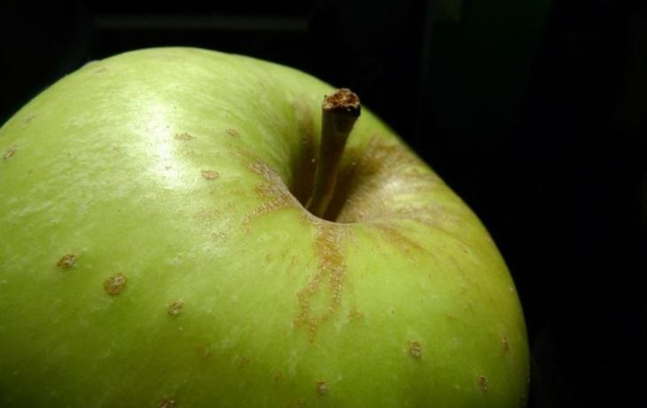 Kraj plánuje vznik potravinové banky. Kde vznikne?