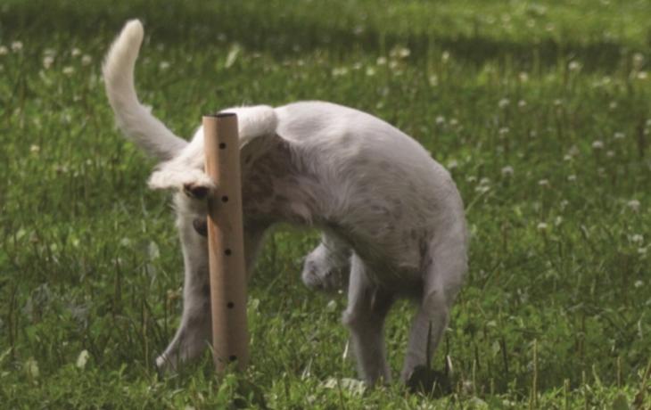 Psí hřiště ozdobily i čůrací sloupky