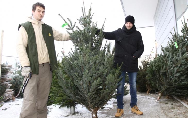 Stromky za stovku budou, ale až týden před Vánoci
