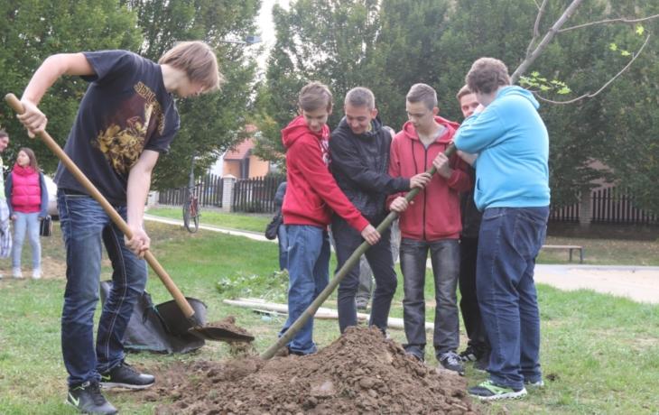 Studenti na dětském hřišti vysadili javor