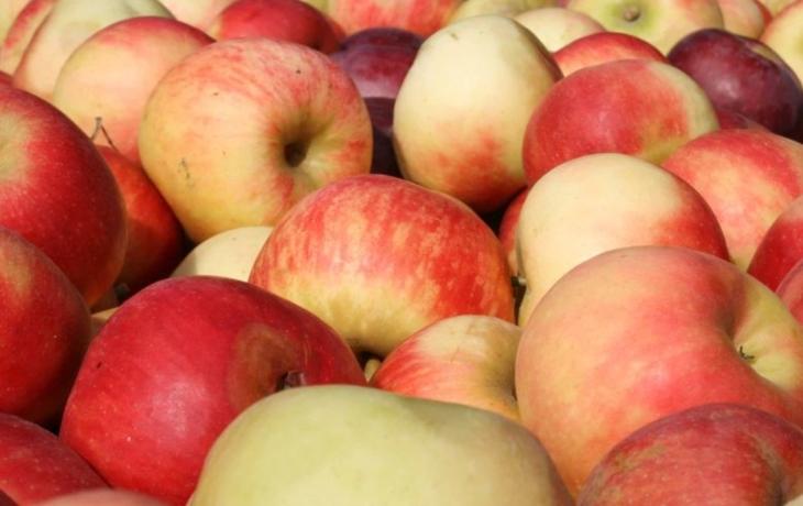 Hostětín nabízí jablka na nespočet způsobů