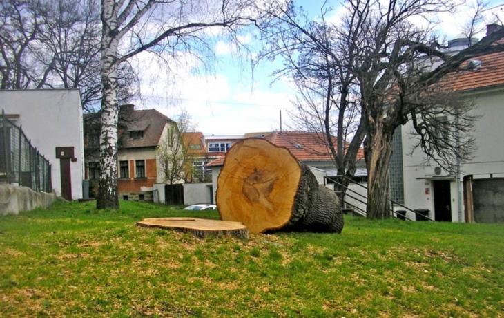 Zmizely z centra i zdravé stromy?