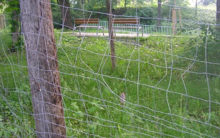Vzácnou orchidej musí chránit plot