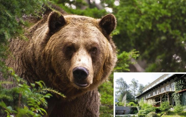V Karpatech se toulá medvěd. Podle stopy je větší než šelma z Beskyd!