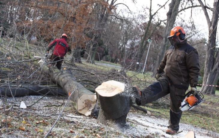 Smetanovy sady: v parku vysadí 13 stromů a 4862 keřů