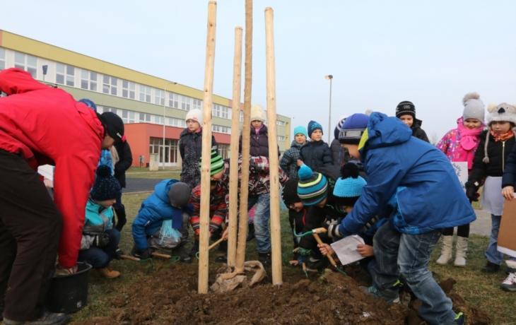 Školáci zasadili třešničku Rolničku