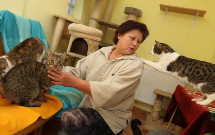 Útulku dochází krmení i podestýlky. Kočky měsíčně sežerou 40 tisíc!