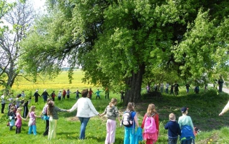 Hruška soutěží o Strom roku
