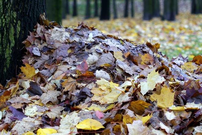Radnice vozila listí do lesa. Byl to prý recept proti černé skládce