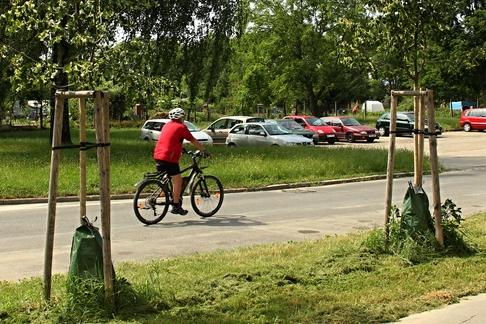 Tropy udeřily, v Uherském Hradišti pomáhají se zavlažováním stromů speciální vaky