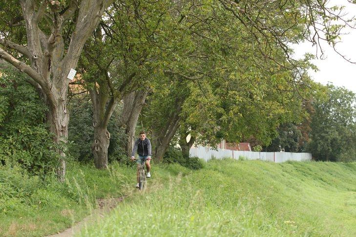 Na hrázi u Moravy jde o život, stromy jsou duté!