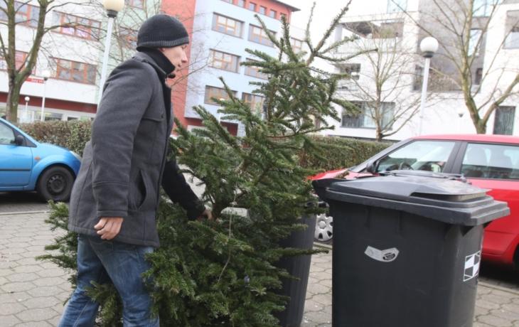 V Brodě zítra začíná organizovaný svoz stromků