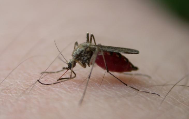 Po velké vodě začínají trápit hejna komárů