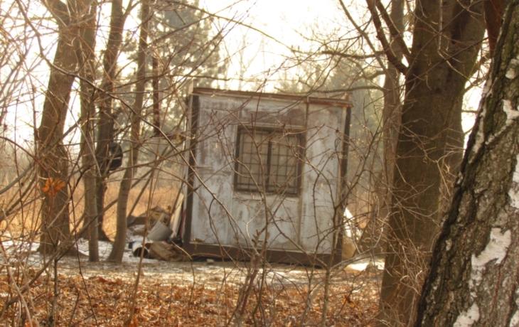 Bezdomovci těží dřevo