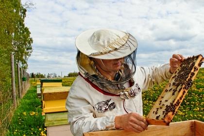 Originální pomoc včelařům. Cesty zpevněné drcenou sutí
