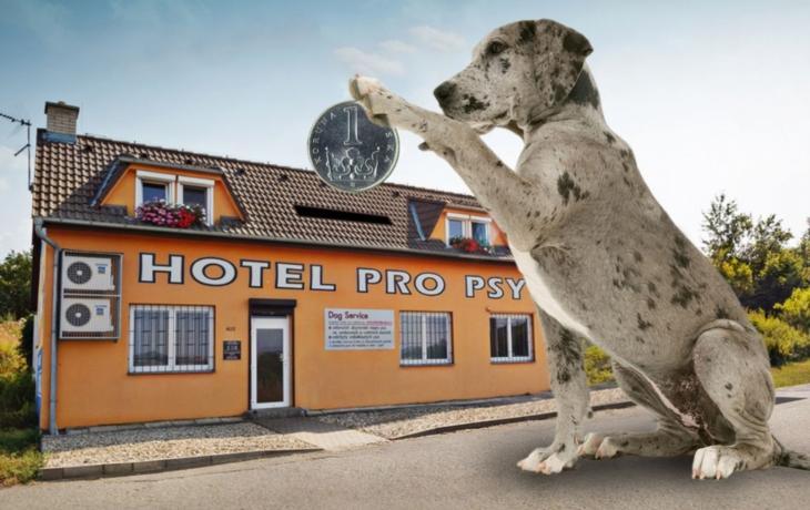 Město posílá kontroly do Hotelu pro psy. Je továrnou na veřejné peníze?