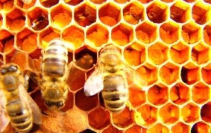 Podpora pro včelaře: 500 tisíc