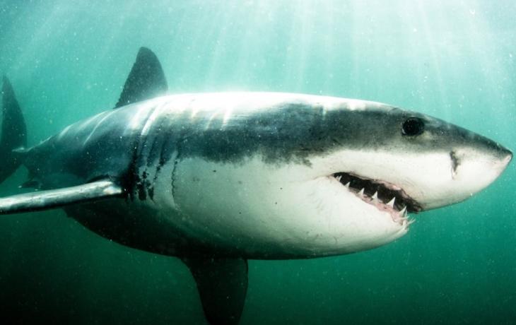 VÍME PRVNÍ: Turista z Brodska přišel u Rudého moře o život. Usmrtil ho žralok!