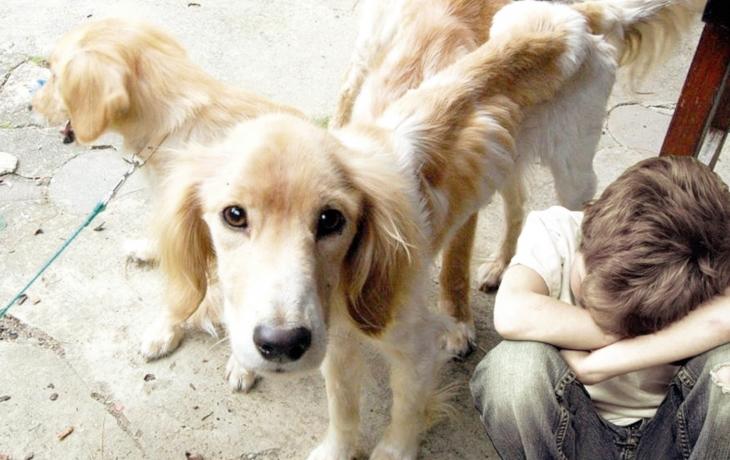Týraní psi přežili vlastní smrt. Zbavili se blech a přibrali