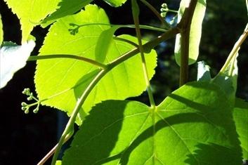 Biokoridor osází 65 tisíci stromů!