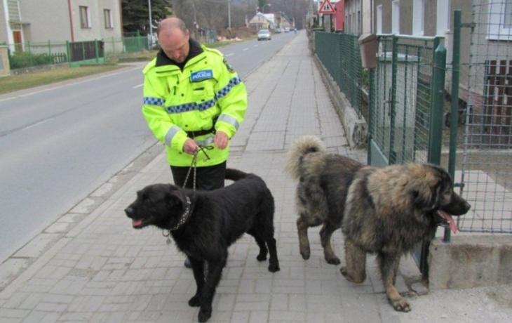 Obce trápí psi, povolat chtějí strážníky