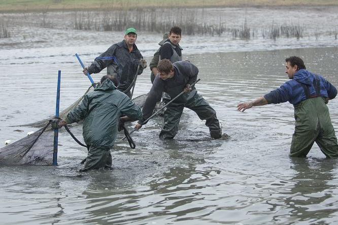 Rybáři chtějí chovný rybník, změní územní plán?