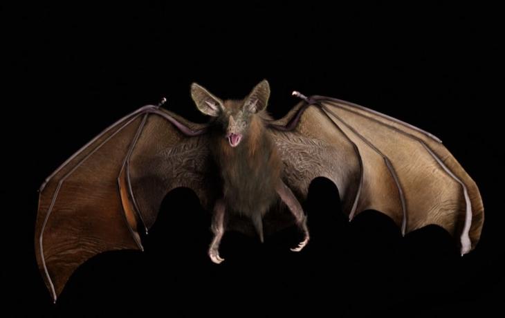 V digestoři uvízli netopýři! Pískali na lidi z paneláku