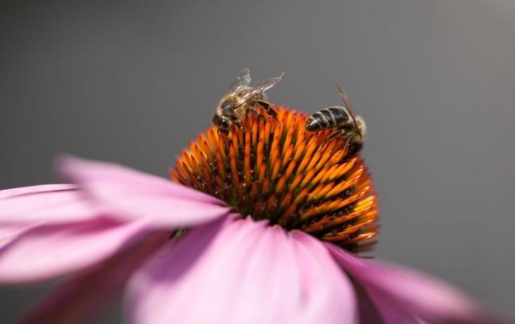 Včely ohrožuje mor, kraj vybral firmu na monitoring