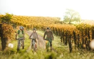 Na kole vinohrady…