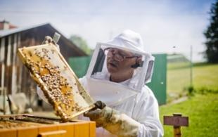 Včelaři mohou žádat…